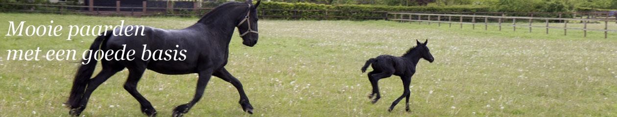 Mirages Horses
