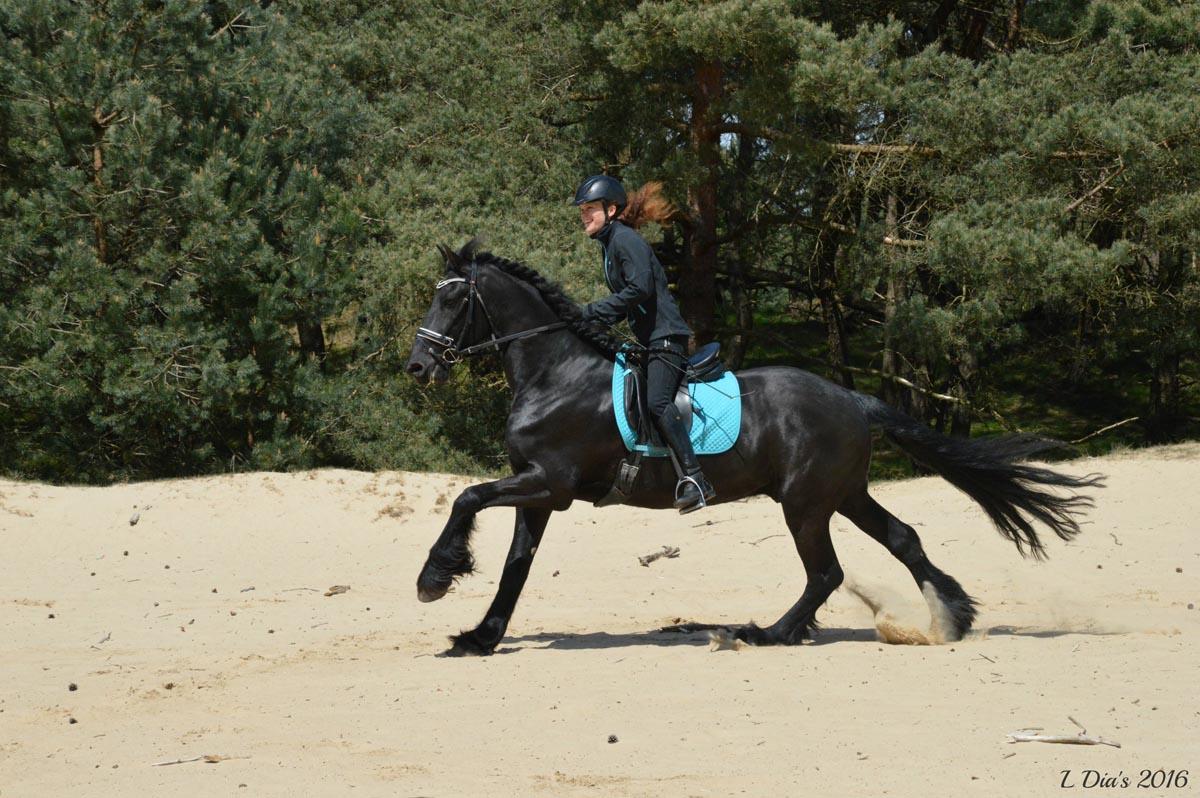 Paarden Te Koop Mirages Horses