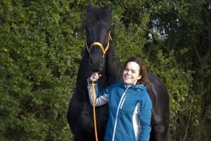 paarden trainen, paarden keuren, jonge paarden, fries paard, friese paarden, friese paarden te koop