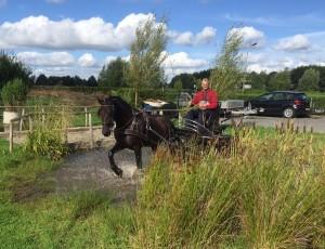 paard te koop, paardenmatchmaker, paarden bemiddeling