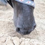 zandkoliek, koliek, paard, zand eten